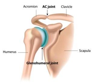 shoulder-anatomy381